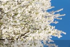 Spring1405